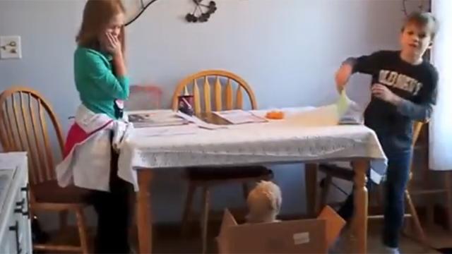 강아지를 깜짝 선물로 받고서는