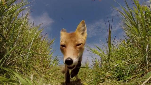카메라를 처음 본 여우는 . . 헐