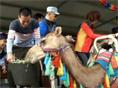 낙타 트레킹