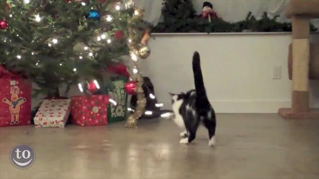 고양이 호기심 폭풍 자극하는 것