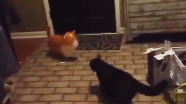 진심이 느껴진 고양이의 반응