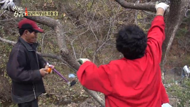 여자 이장님의 감나무 타기 신공