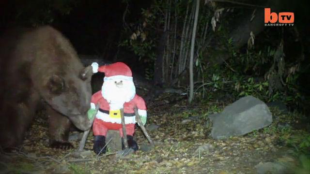 산타의 존재가 언짢은 불곰