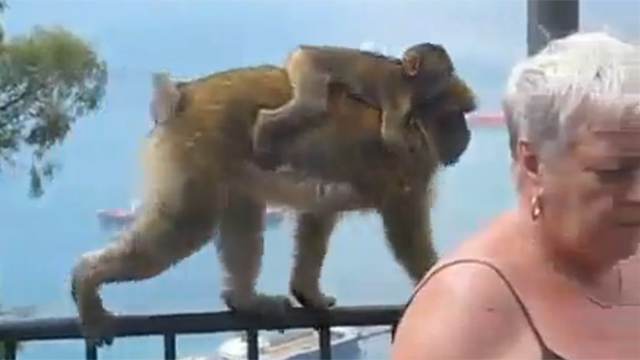 원숭이가 정말 똑똑하다 느낄 때