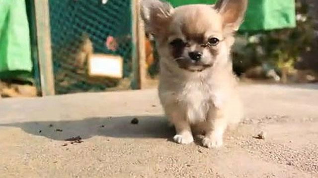 삼시세끼 보게 만드는 강아지
