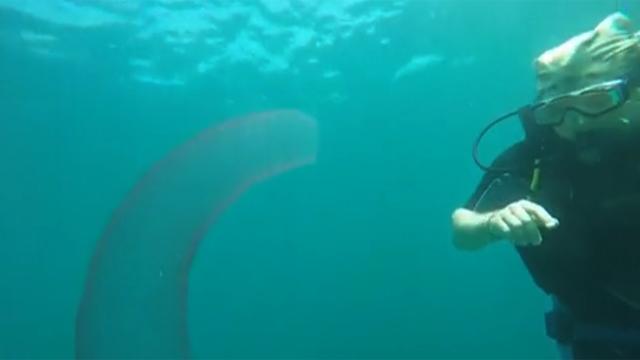 바다에서 만난 수상한 생명체