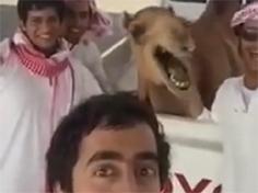 사람의 표정을 따라한 낙타