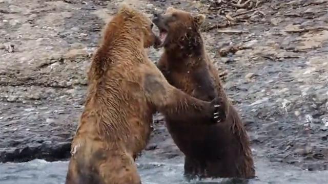 곰 싸움 실제로 처음 봐