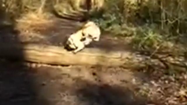 아뿔사 강아지 점프 대 굴욕