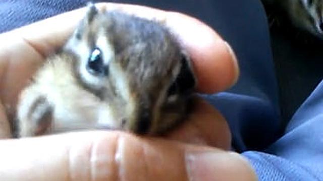 한 손에 안기는 아기 다람쥐