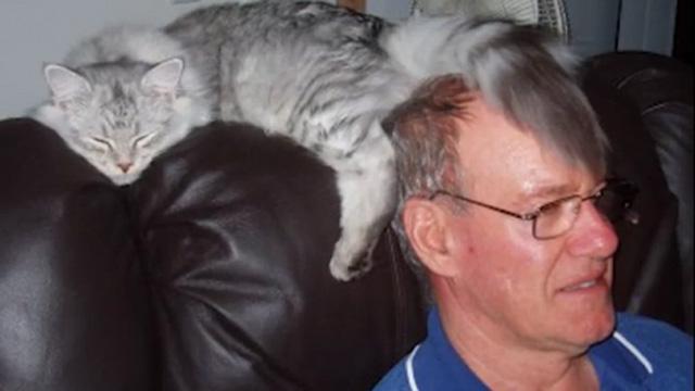 어디서든 잘 자는 고양이의 모습