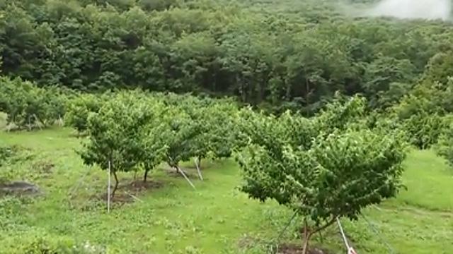 1300평 복숭아밭이 단돈 10만 원
