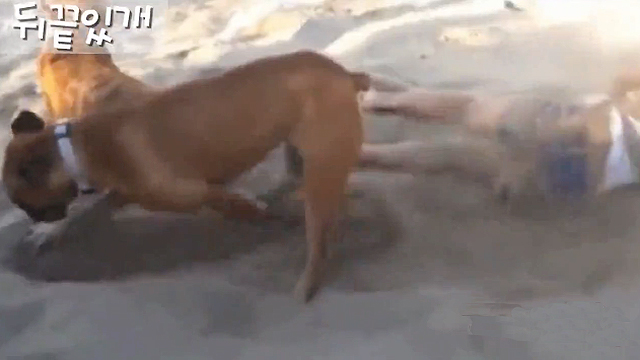 뒤끝 있는 개에 잘못 걸린 꼬마