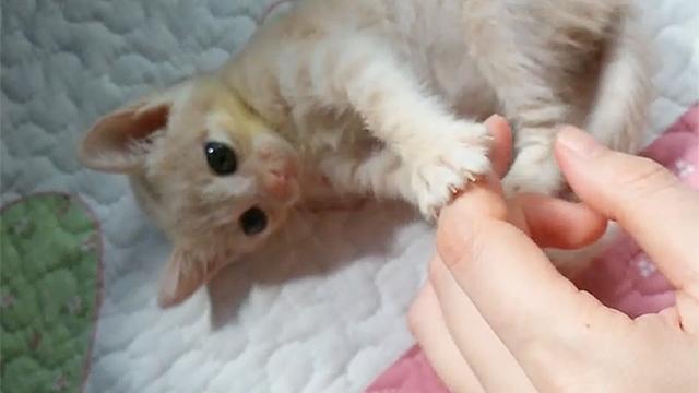 심쿵하게 하는 냥이 손가락 장난