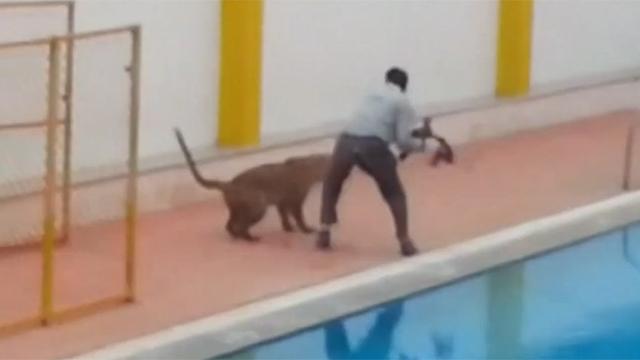 인도 한 학교에 출몰한 표범