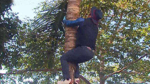 원주민도 인정한 나무 타기 실력