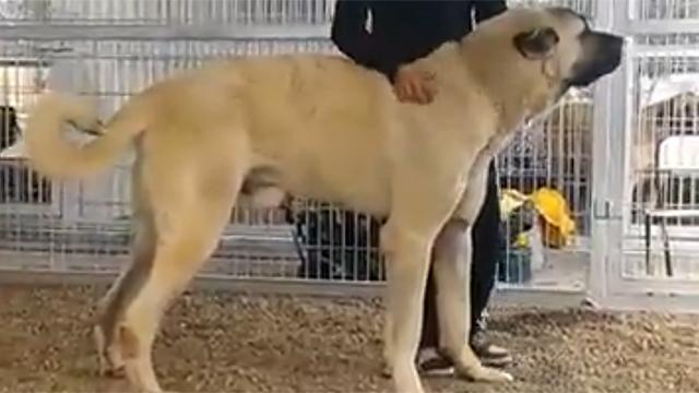 개 크기가 정말 어마어마하다