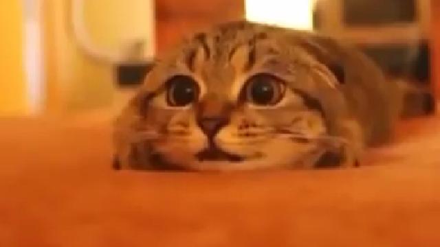 공포 영화 본 고양이 표정 변화