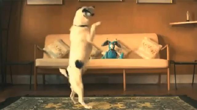 개가 혼자 놀 때는 이렇게 논대