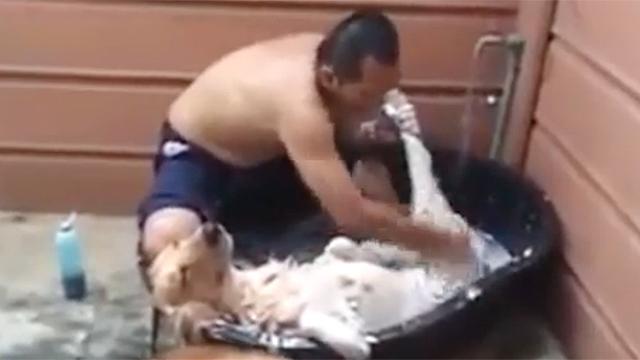 더없이 편한 자세로 목욕 받는 중