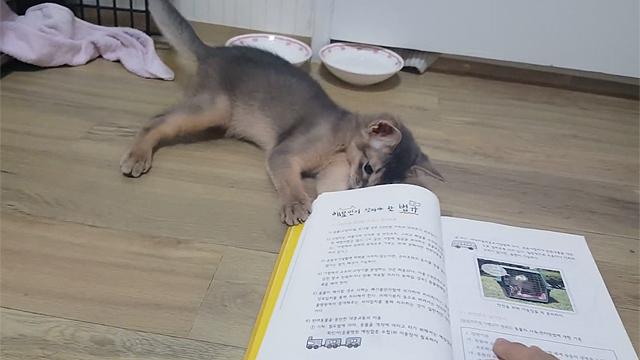 책을 무서워하는 고양이 반응