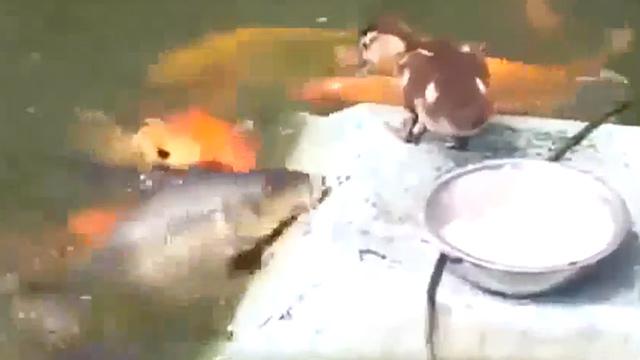 물고기 밥 잘 주기로 소문난 듯