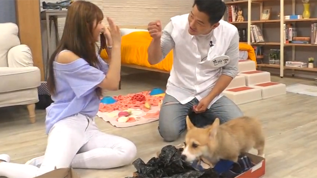 [독점] 강아지에게 중요한 훈련