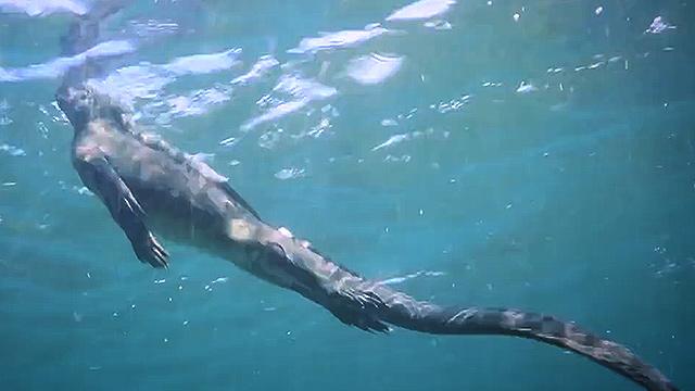 갈라파고스에 사는 생명체 정체