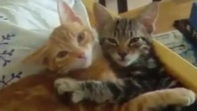 고양이마저도 연애하는데 나는?