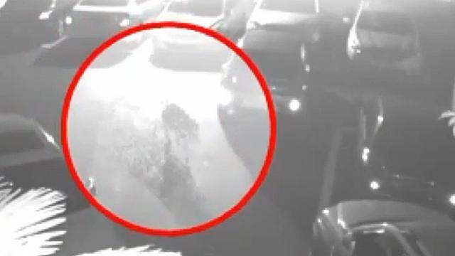 아파트 CCTV 포착된 동물 정체