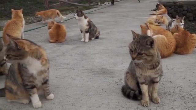 사람보다 고양이가 더 많은 동네