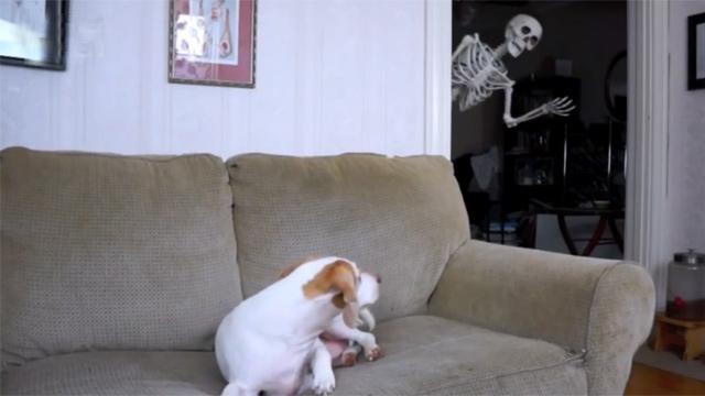 해골 마주친 강아지 황당한 반응
