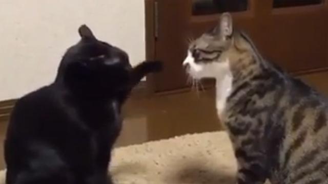 눈치싸움하면 역시 고양이지!