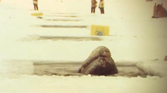 얼음 속 갇힌 고래 구출 작전